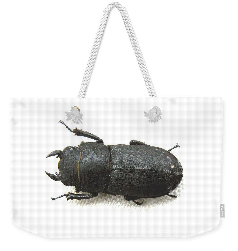 Beetle Weekender Tote Bag featuring the photograph Lesser Stag Beetle by Tom Conway
