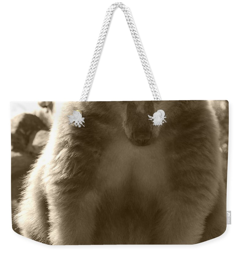 Grizzly Weekender Tote Bag featuring the photograph Let Me Think About It by Kathy Sampson