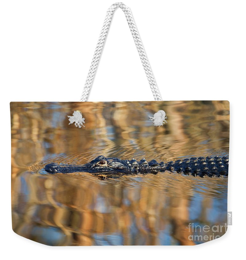 Alligator Weekender Tote Bag featuring the photograph Lethal Glide by Mike Dawson