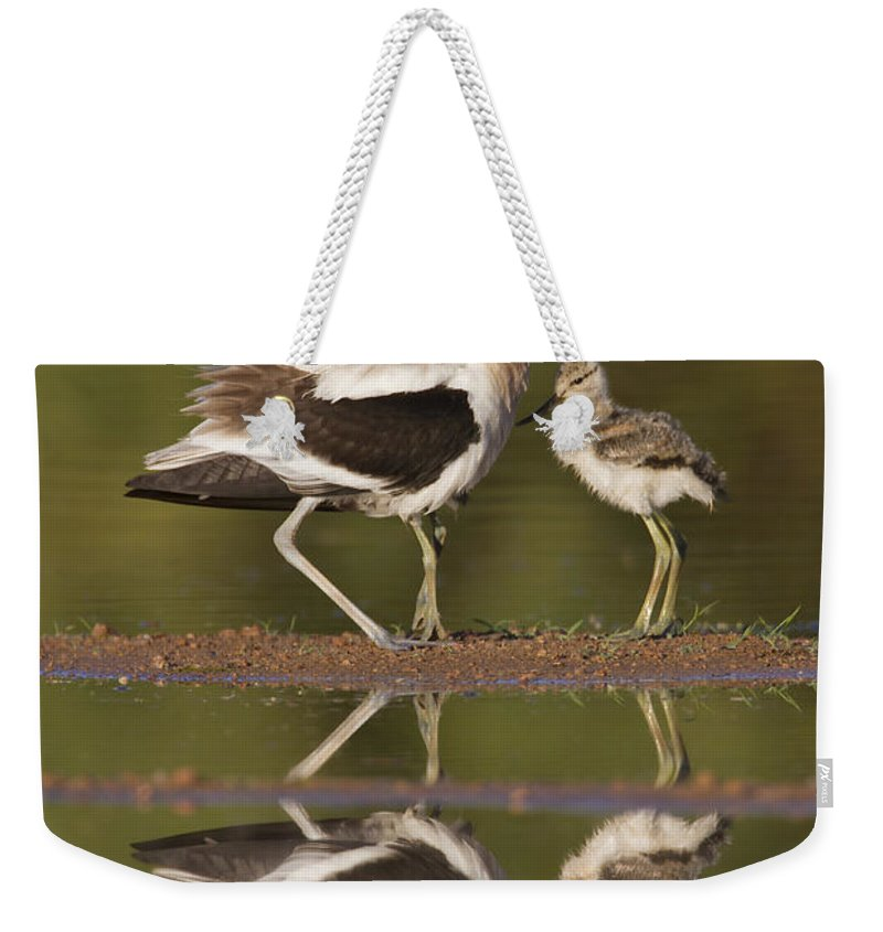 American Avocet Weekender Tote Bag featuring the photograph Lets Go by Bryan Keil
