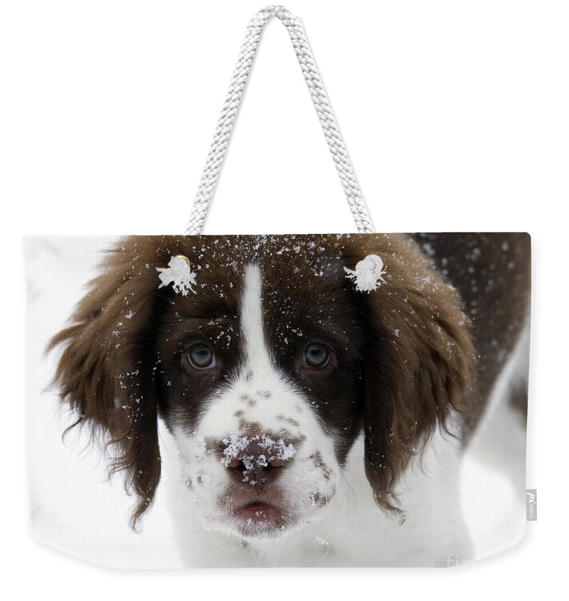 Puppy Weekender Tote Bag featuring the photograph Lets Play by Mike Dawson