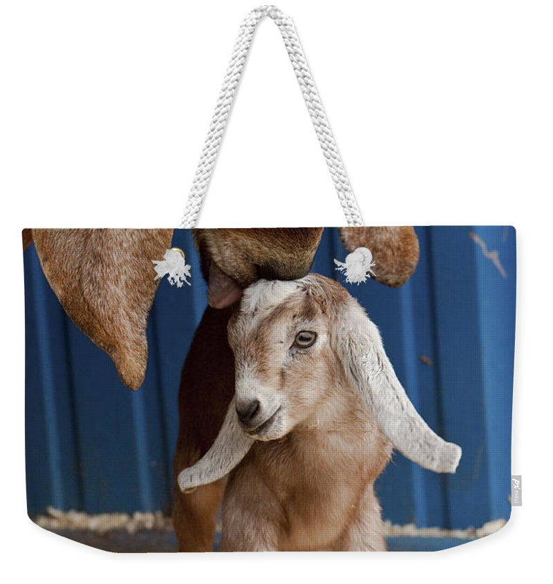 Goat Weekender Tote Bag featuring the photograph Licked Clean by Caitlyn Grasso