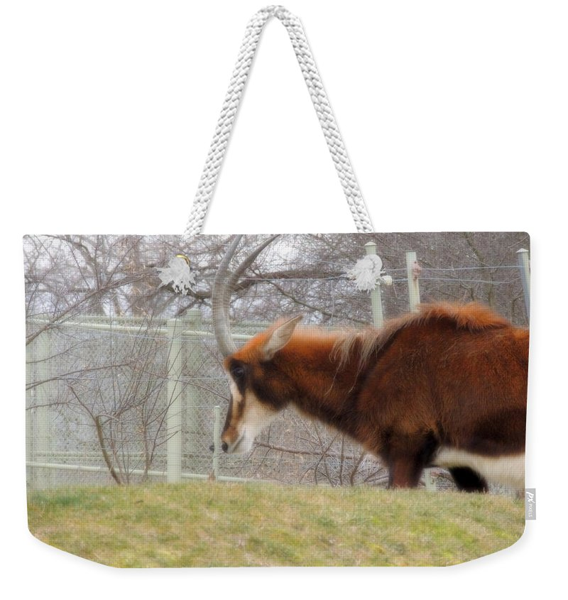 Life Weekender Tote Bag featuring the photograph Life Review by Munir Alawi