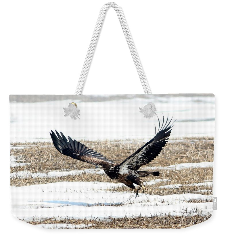 Bald Eagle Weekender Tote Bag featuring the photograph Lift Off by Lori Tordsen
