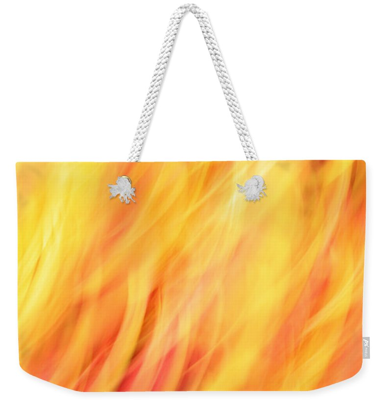Light Weekender Tote Bag featuring the photograph Light Branches by Munir Alawi