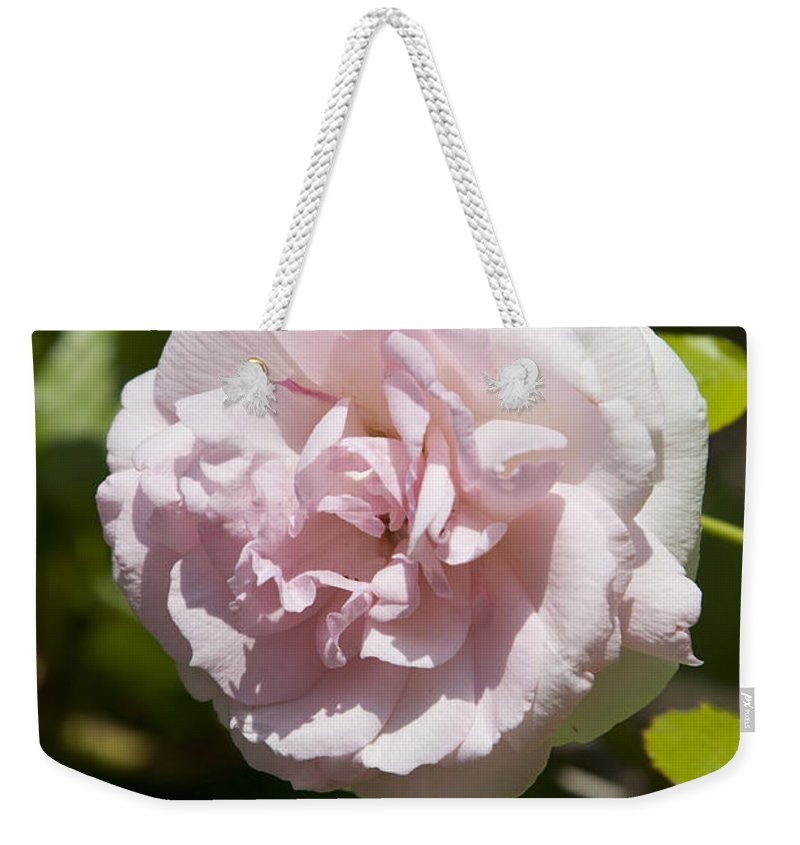 Pink Weekender Tote Bag featuring the photograph Light Pink Rose by Jason O Watson