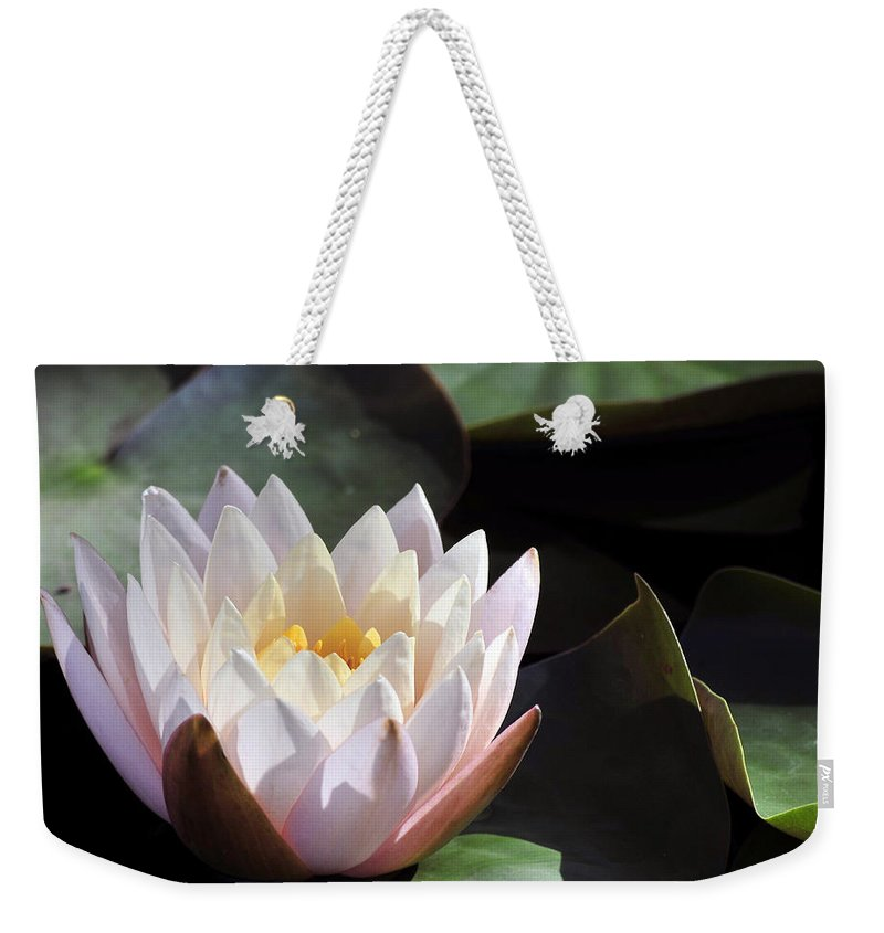 Summer Weekender Tote Bag featuring the photograph Light Pink Water Lily by Terri Winkler