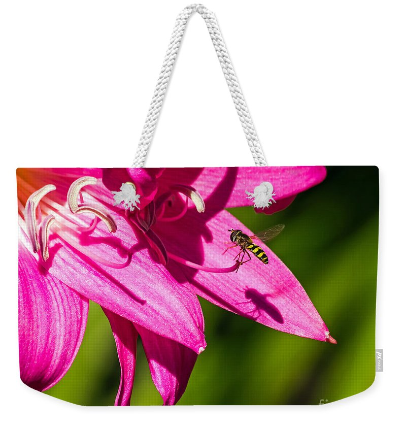 Amaryllis Belladonna Weekender Tote Bag featuring the photograph Lily And Fly by Kate Brown