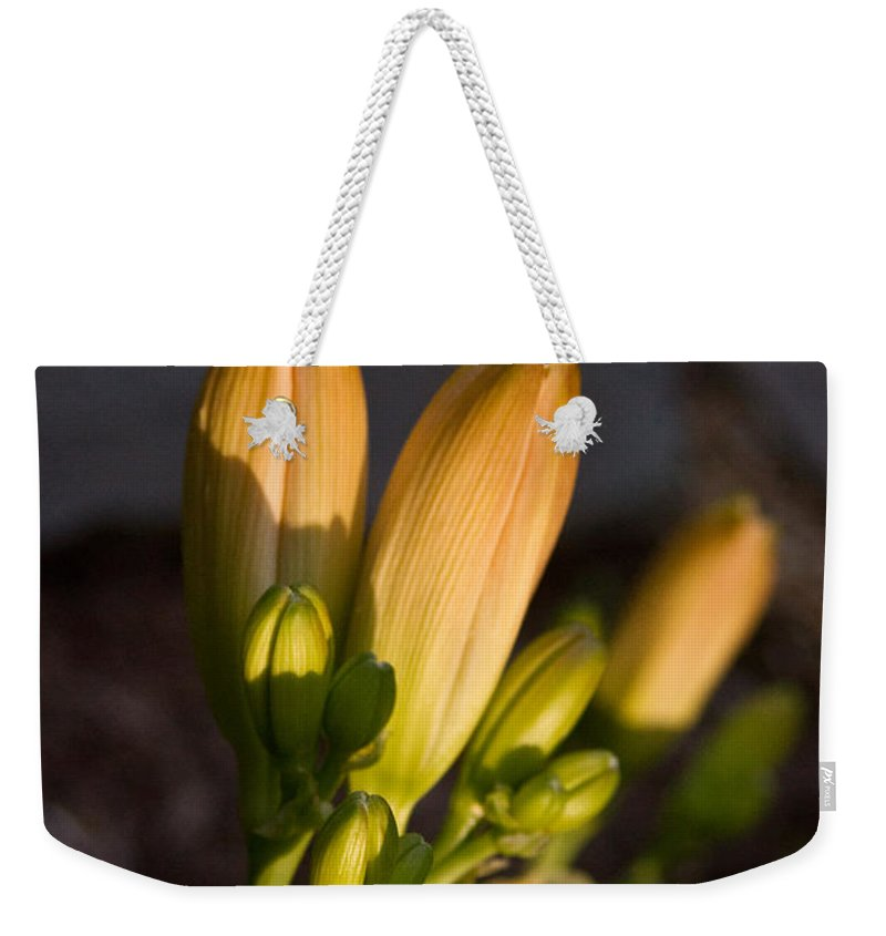 Lily Weekender Tote Bag featuring the photograph Lily Blossoms At Sunset by Douglas Barnett