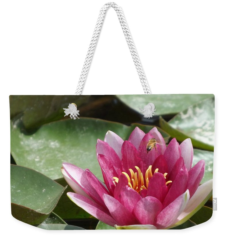 Pink Weekender Tote Bag featuring the photograph Lily Darling by Caryl J Bohn