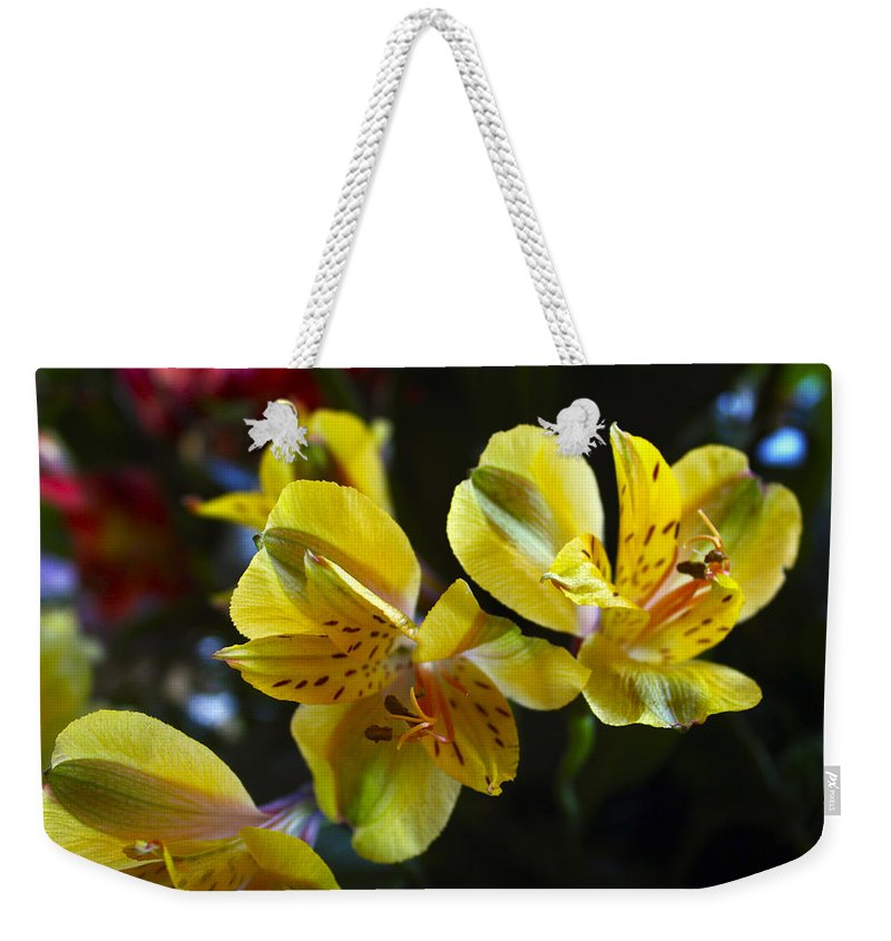 Lily Weekender Tote Bag featuring the photograph Lily Of The Incas by Kurt Van Wagner