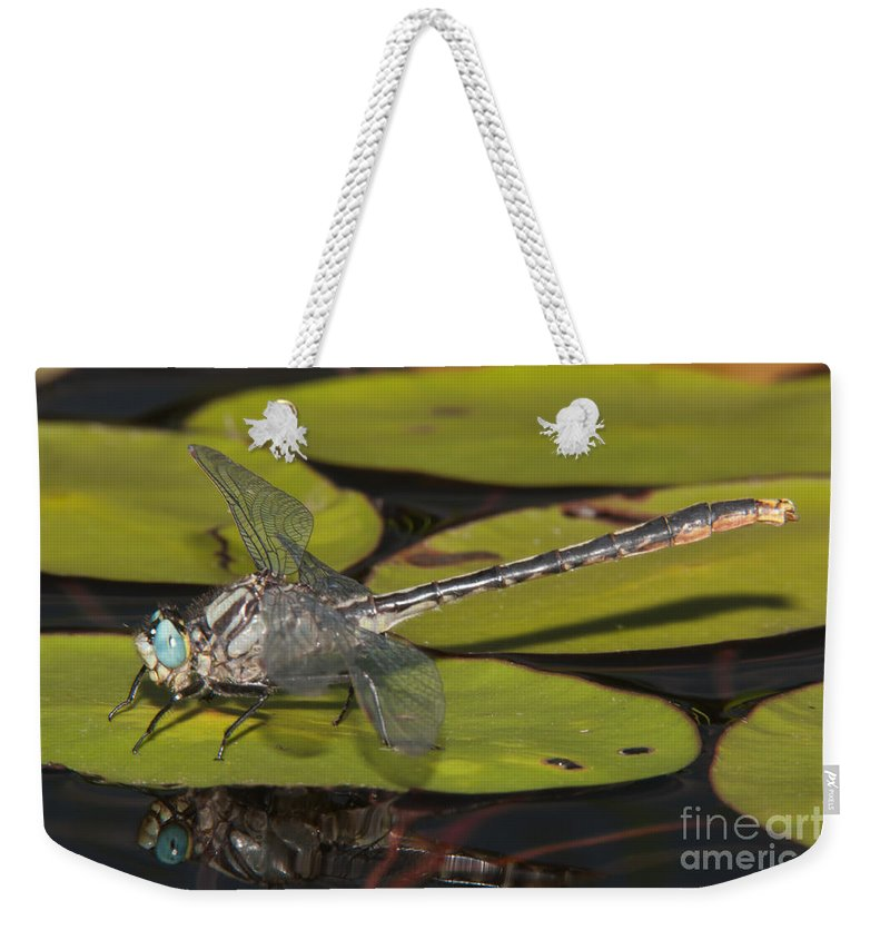 Clarence Holmes Weekender Tote Bag featuring the photograph Lilypad Clubtail On A Lily Pad by Clarence Holmes
