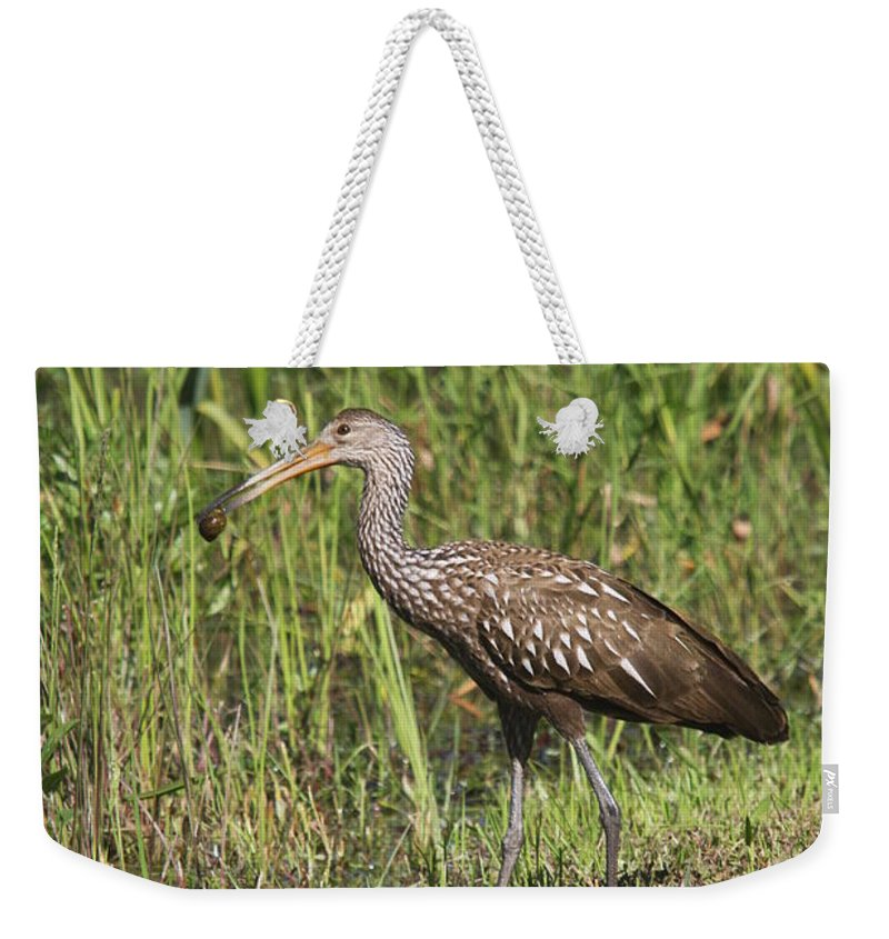 Limpkin Weekender Tote Bag featuring the photograph Limpkin With Apple Snail by Christiane Schulze Art And Photography