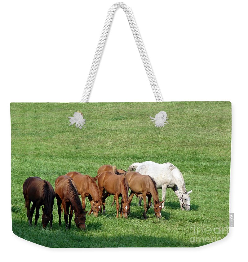 Horse Weekender Tote Bag featuring the photograph Line Feeding by Olivier Le Queinec