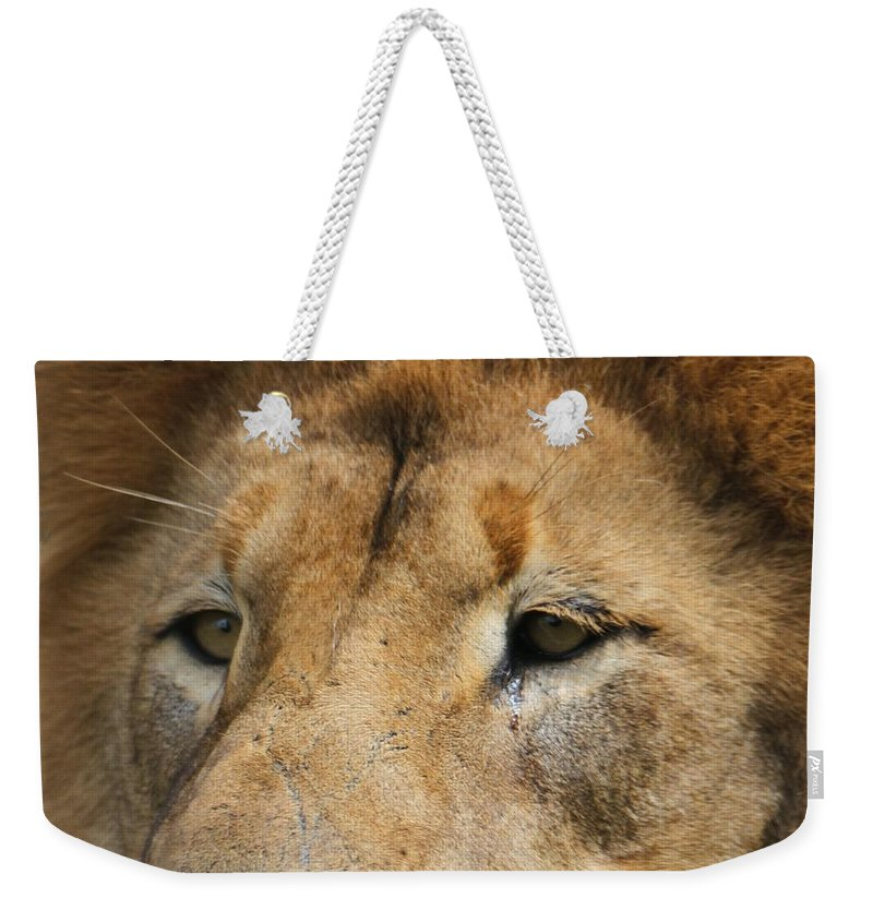 The Lion King Weekender Tote Bag featuring the photograph Lion Eyes by Dan Sproul