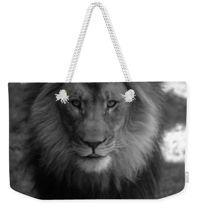 Animals Weekender Tote Bag featuring the photograph Lion Going For A Haircut by Thomas Woolworth