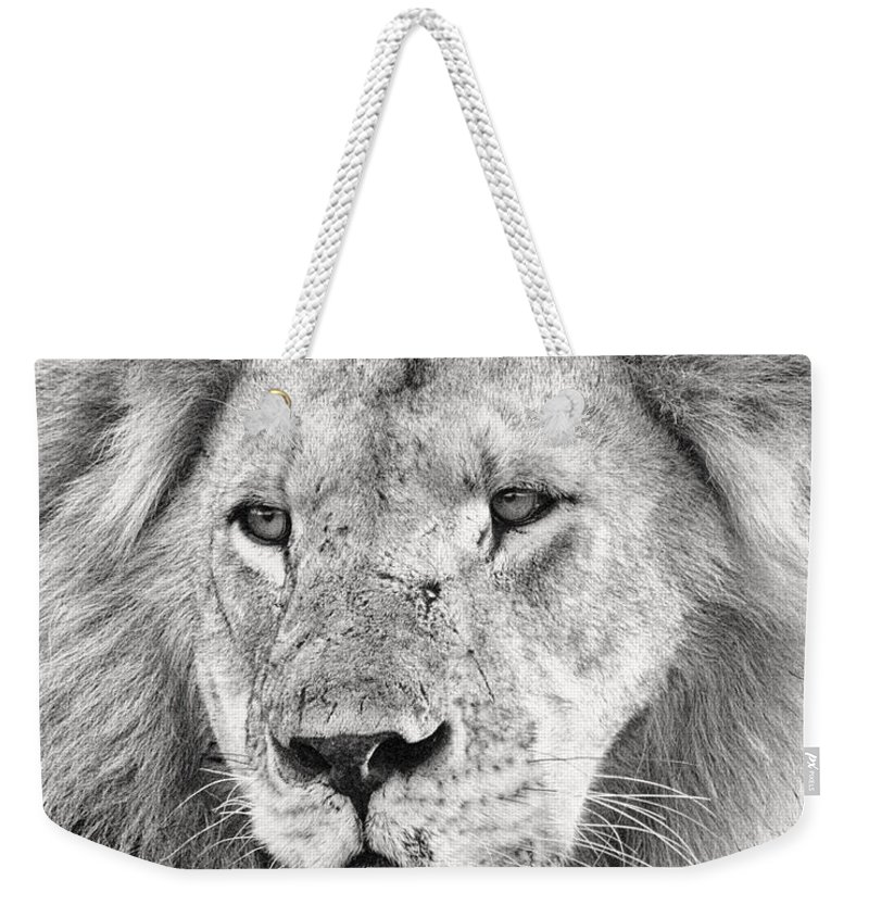 3scape Photos Weekender Tote Bag featuring the photograph Lion King by Adam Romanowicz