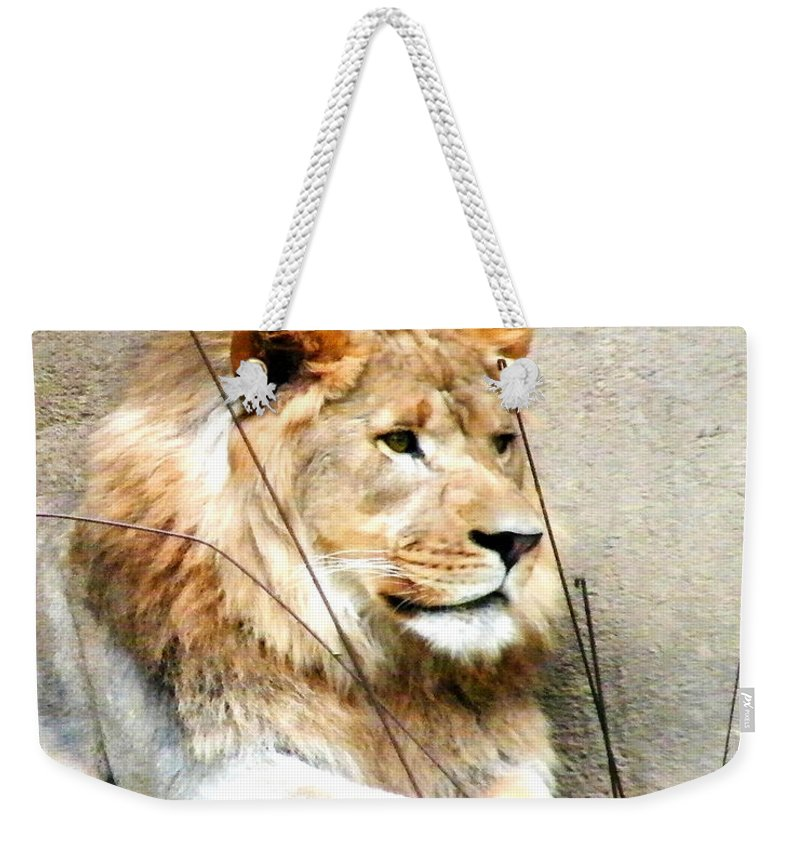 Lion Weekender Tote Bag featuring the photograph Lion by Lizi Beard-Ward