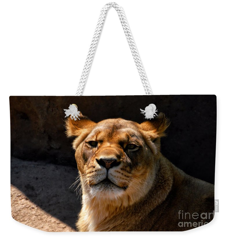 Animals Weekender Tote Bag featuring the photograph Lioness Hey Are You Looking At Me by Thomas Woolworth
