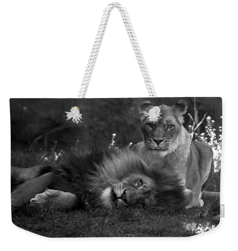 Animals Weekender Tote Bag featuring the photograph Lions Me And My Guy by Thomas Woolworth