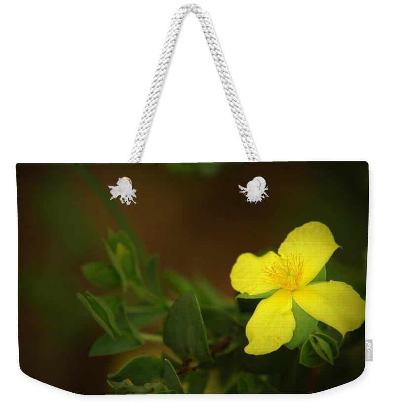 Flower Weekender Tote Bag featuring the photograph Lit Flower by David Weeks
