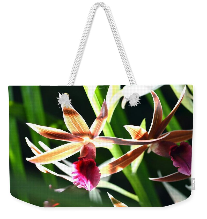 Orchids Weekender Tote Bag featuring the photograph Lit Up Orchid by Sonali Gangane