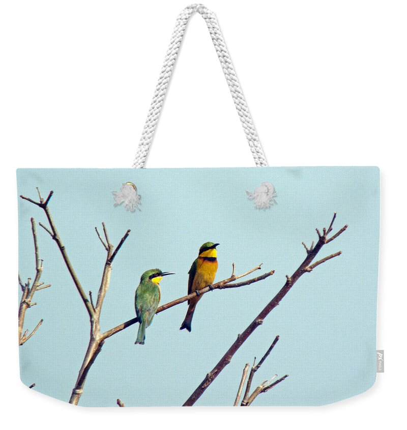 Bee Eaters Weekender Tote Bag featuring the photograph Little Bee-eaters by Tony Murtagh