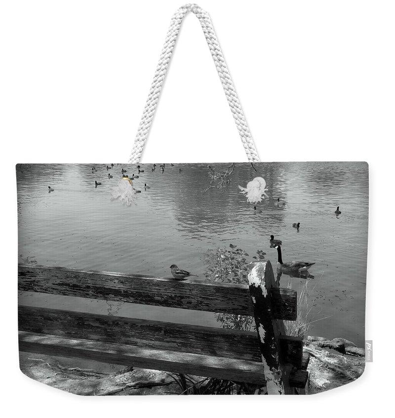 Little Bird On A Bench Weekender Tote Bag featuring the photograph Little Bird On A Bench by Beth Vincent