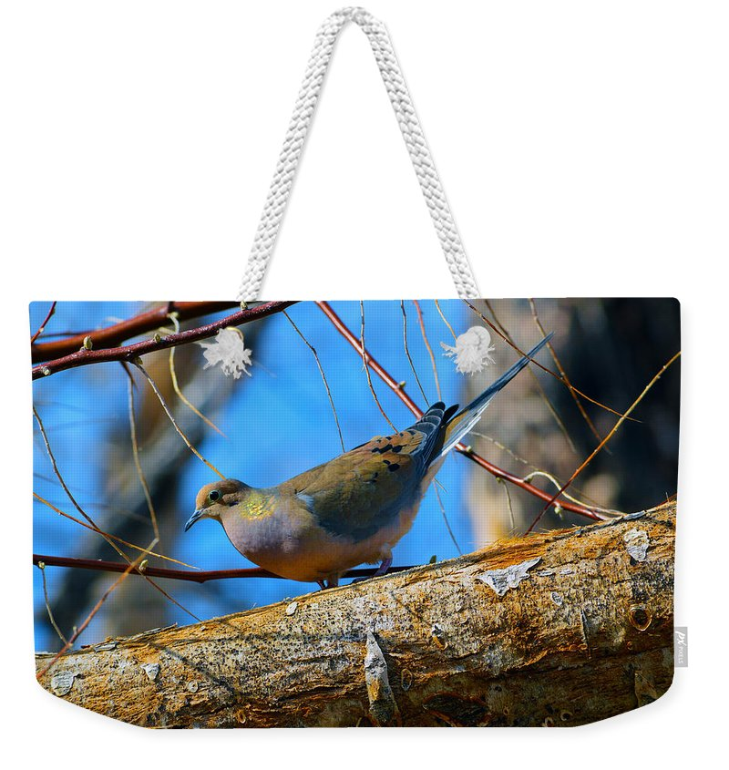 Bird Weekender Tote Bag featuring the photograph Little Birdie 2 by Brent Dolliver