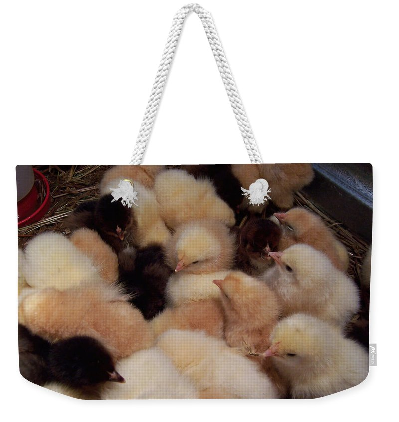 Baby Chicks Weekender Tote Bag featuring the photograph Little Bits Of Fluff by Kathy Clark
