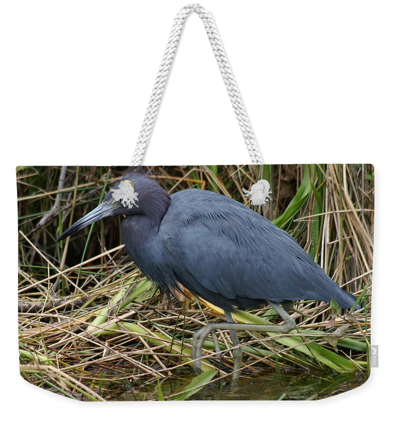 Heron Weekender Tote Bag featuring the photograph Little Blue Heron Hunting by Larry Allan