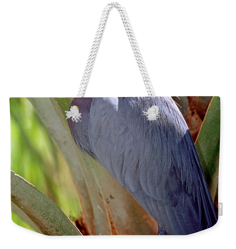Fauna Weekender Tote Bag featuring the photograph Little Blue Heron Male In Breeding by Millard H. Sharp