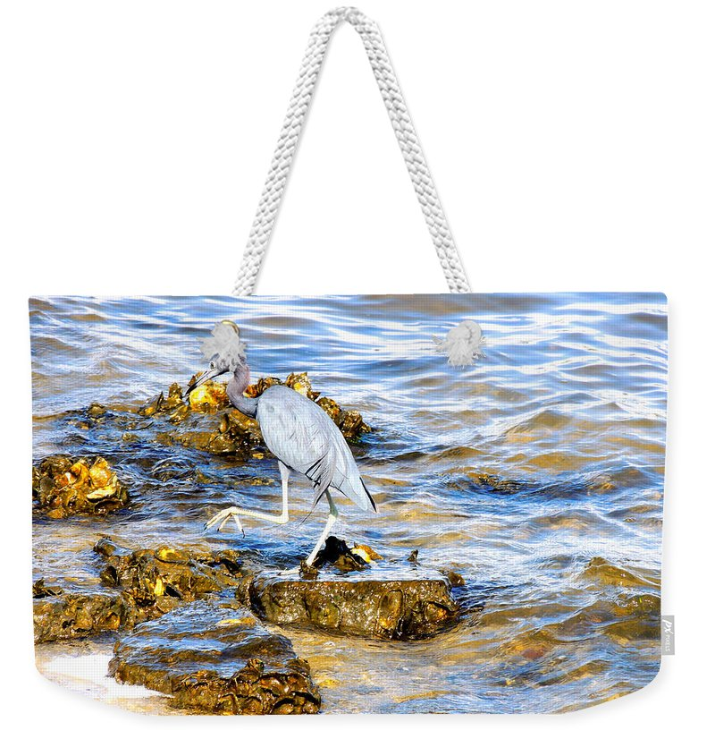Wading Birds Weekender Tote Bag featuring the photograph Little Blue Heron by Marilyn Holkham