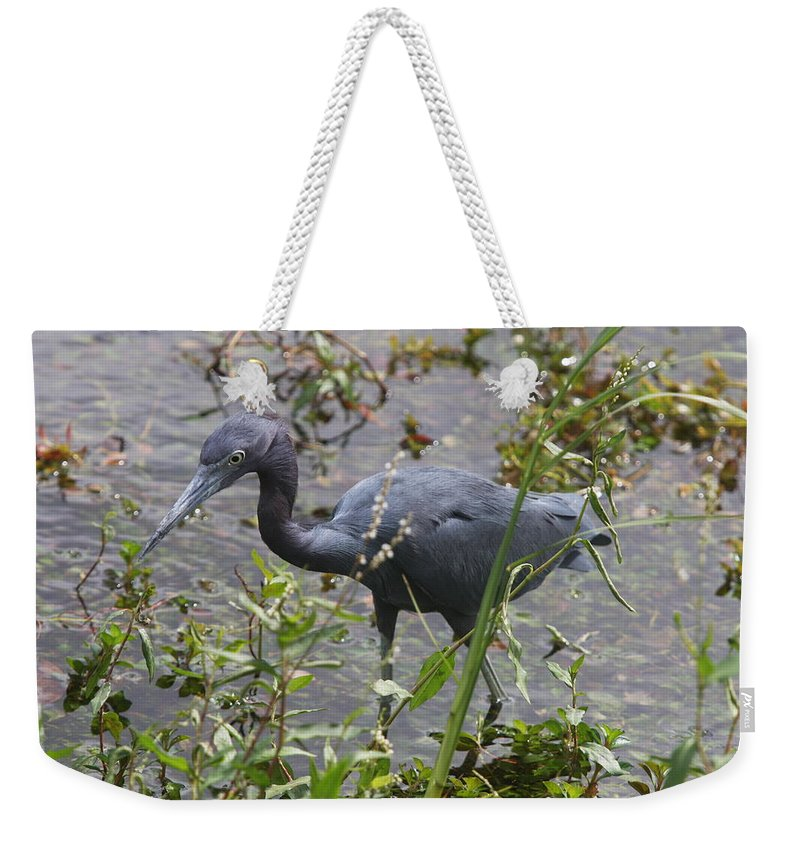 Heron Weekender Tote Bag featuring the photograph Little Blue Heron - Waiting For Prey by Christiane Schulze Art And Photography