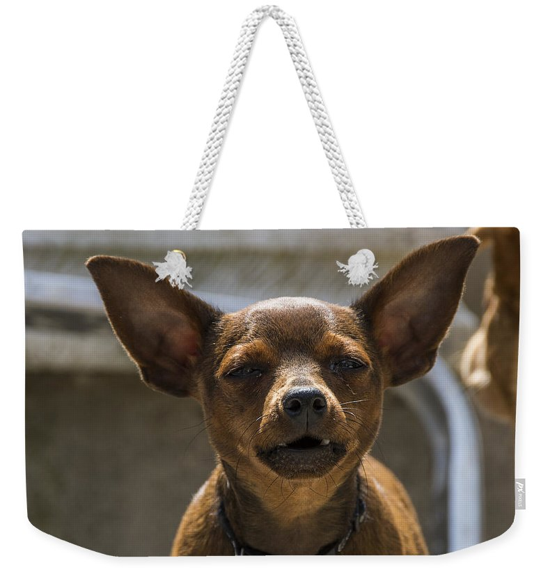 Animal Weekender Tote Bag featuring the photograph Little Dog by Paulo Goncalves