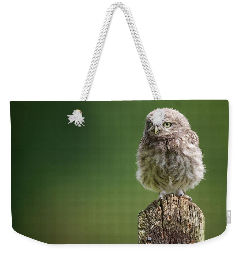 Owlet Weekender Tote Bag featuring the photograph Little Fuzzy by Markbridger
