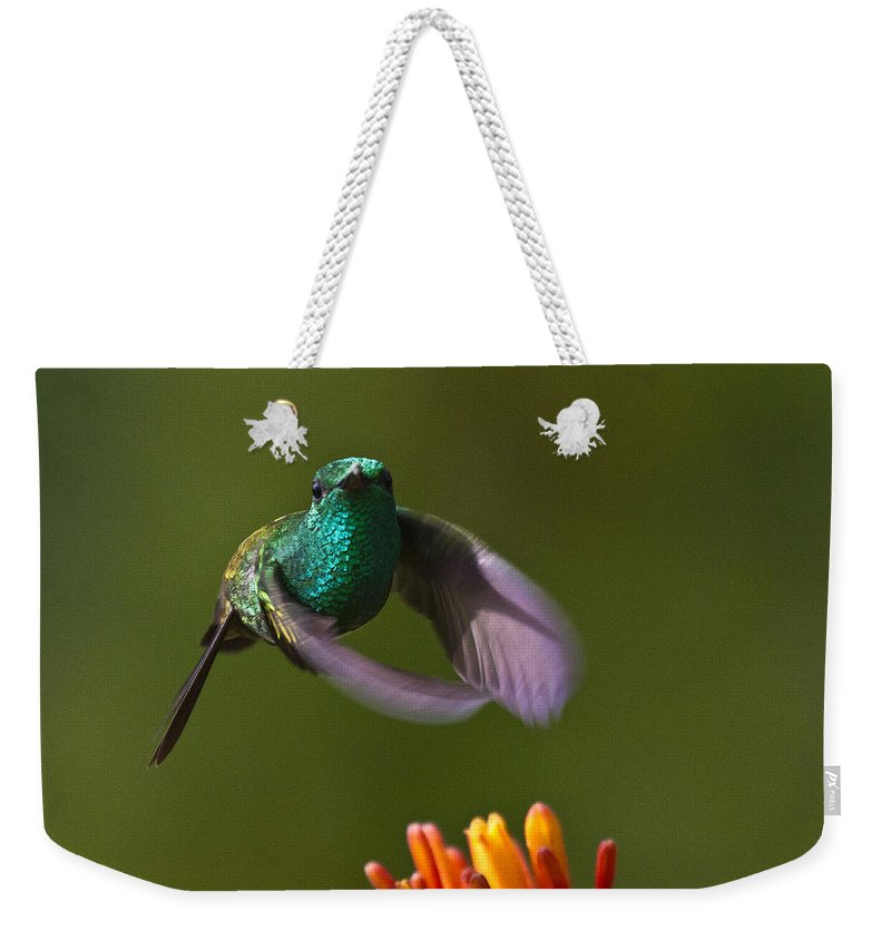 Bird Weekender Tote Bag featuring the photograph Little Hedgehopper by Heiko Koehrer-Wagner