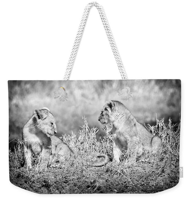 3scape Weekender Tote Bag featuring the photograph Little Lion Cub Brothers by Adam Romanowicz