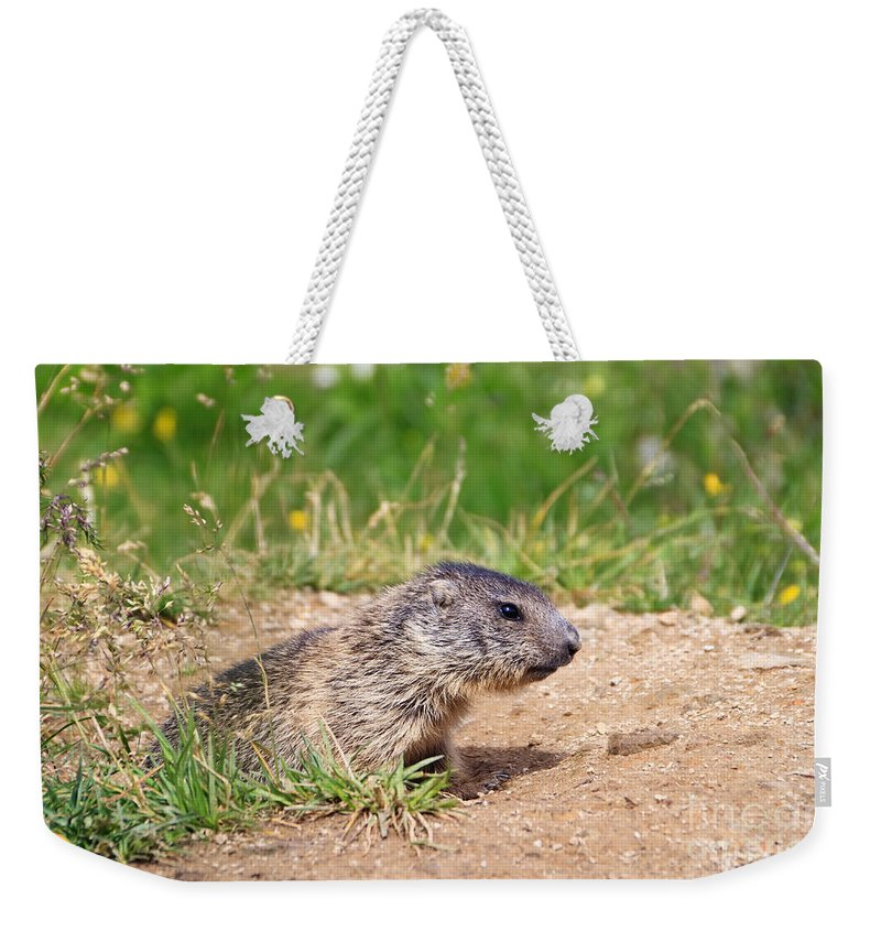 Adorable Weekender Tote Bag featuring the photograph Little Marmot by Antonio Scarpi