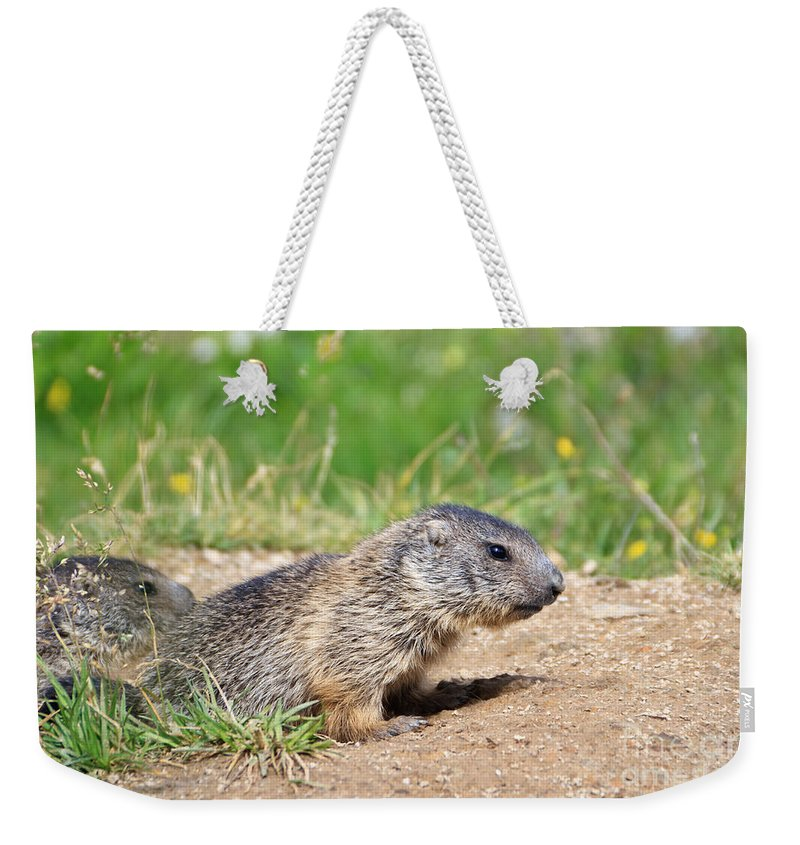 Adorable Weekender Tote Bag featuring the photograph Little Marmots by Antonio Scarpi
