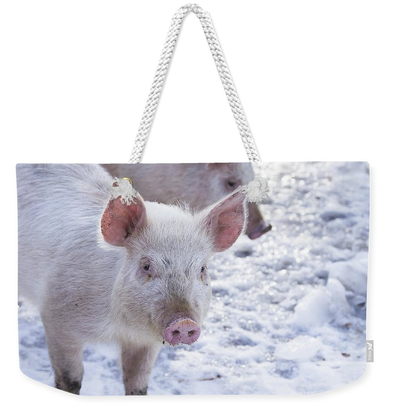 New Hampshire Weekender Tote Bag featuring the photograph Little Piggies by Edward Fielding
