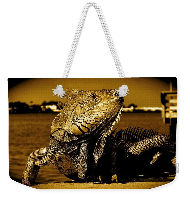 Lizard Print Weekender Tote Bag featuring the photograph Lizard Sunbathing In Miami II by Monique's Fine Art