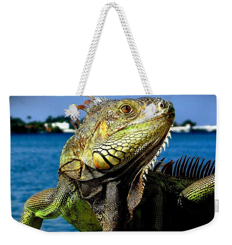 Lizard Print Weekender Tote Bag featuring the photograph Lizard Sunbathing In Miami by Monique's Fine Art