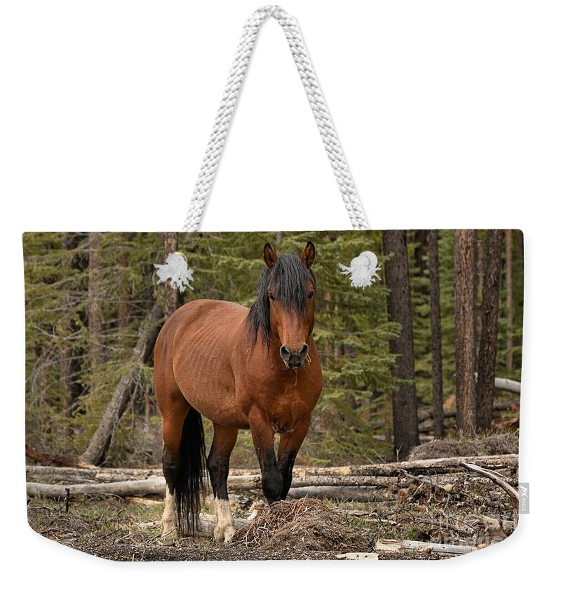 Wild Horse Weekender Tote Bag featuring the photograph Locked On by James Anderson