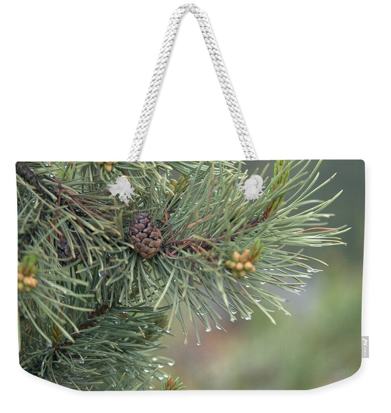 Pine Weekender Tote Bag featuring the photograph Lodge Pole Pine in the Fog by Frank Madia
