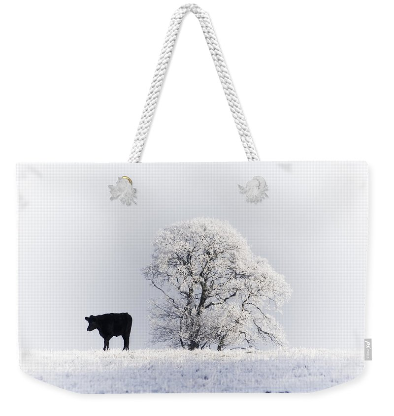Landscape Weekender Tote Bag featuring the photograph Lone Cow by Les McLuckie