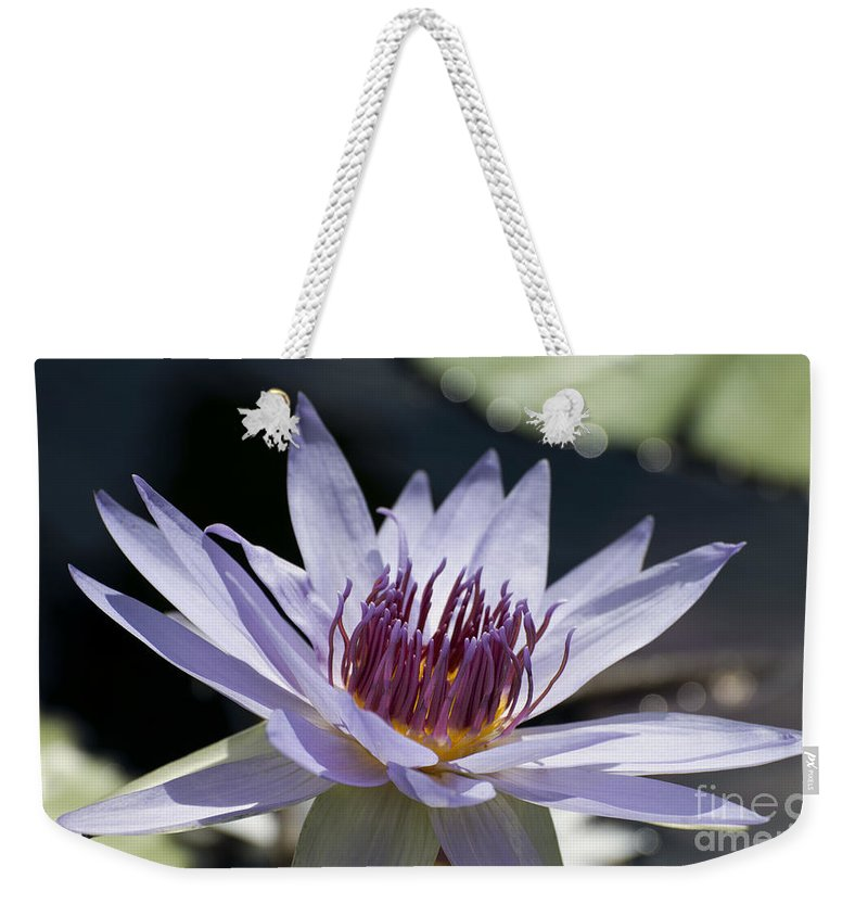 Water Lily Weekender Tote Bag featuring the photograph Lone Star 6163 by Terri Winkler