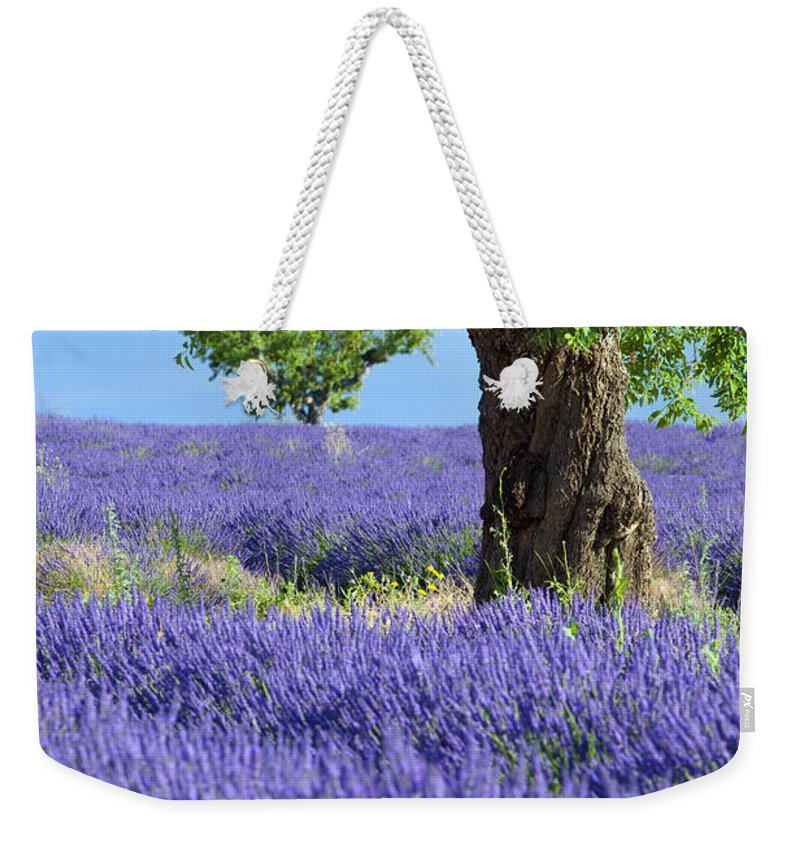 Lavender Weekender Tote Bag featuring the photograph Lone Tree In Lavender by Brian Jannsen