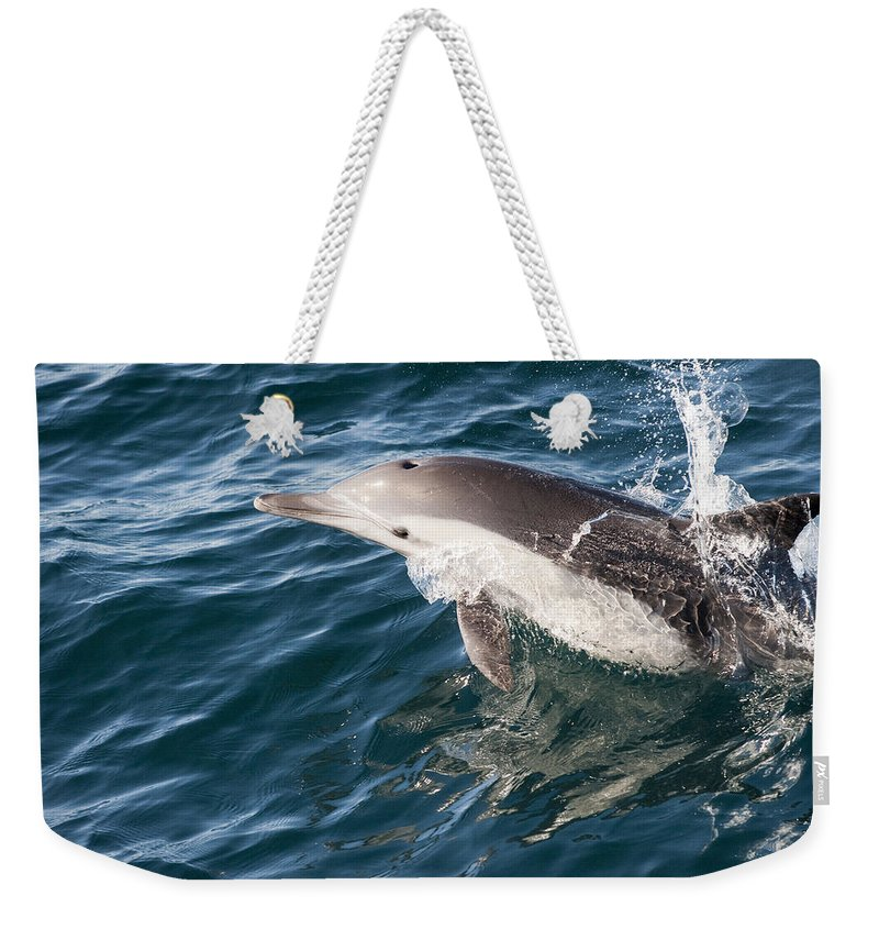 Feb0514 Weekender Tote Bag featuring the photograph Long-beaked Common Dolphin Porpoising by Flip Nicklin
