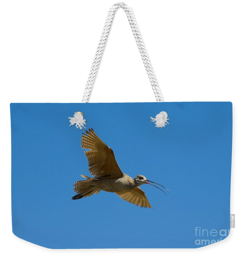 Animal Weekender Tote Bag featuring the photograph Long-billed Curlew In Flight by Anthony Mercieca